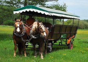 Pferdekutsche, Foto