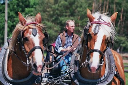 Pferdeland Münchehofe, Pferdekutsche, Bild